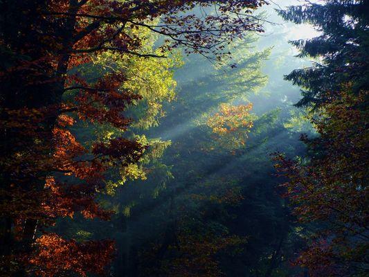 athmosphere d'automne dans ma biosphere