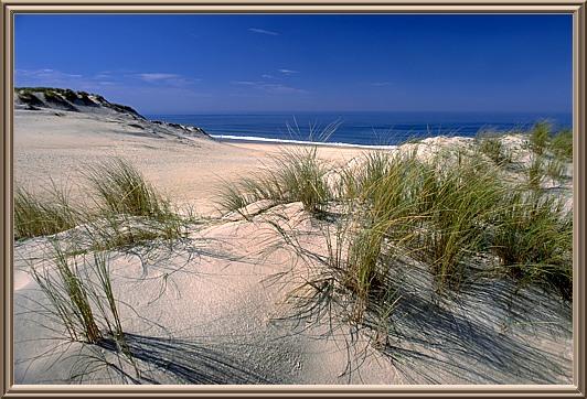 Atlantikdünen (Südfrankreich)