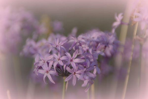 atmosfera floreale