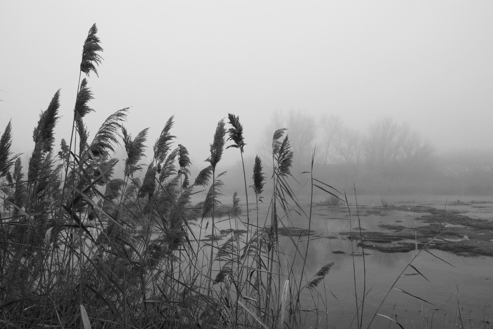 Atrapado en la niebla (Dedicada a Ricard de Decopixel)