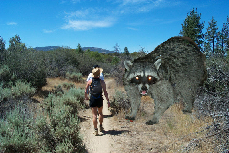ATTACK OF THE 30 FOOT RACCOON!