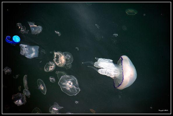 attenti alle meduse