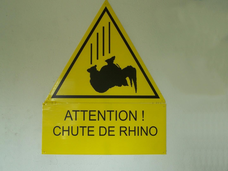attention aux rhinos!