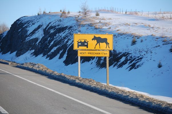 ATTENTION !!! MOOSE CROSSING !