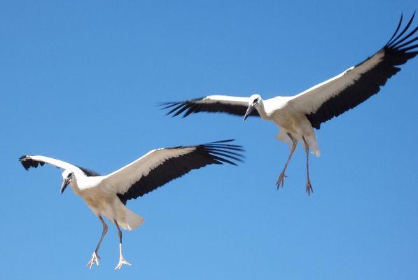 Atterrissage en formation