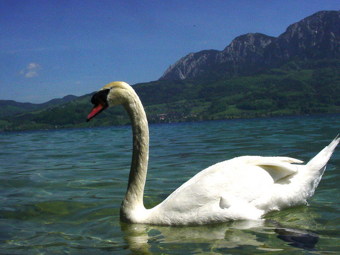 Attersee ....
