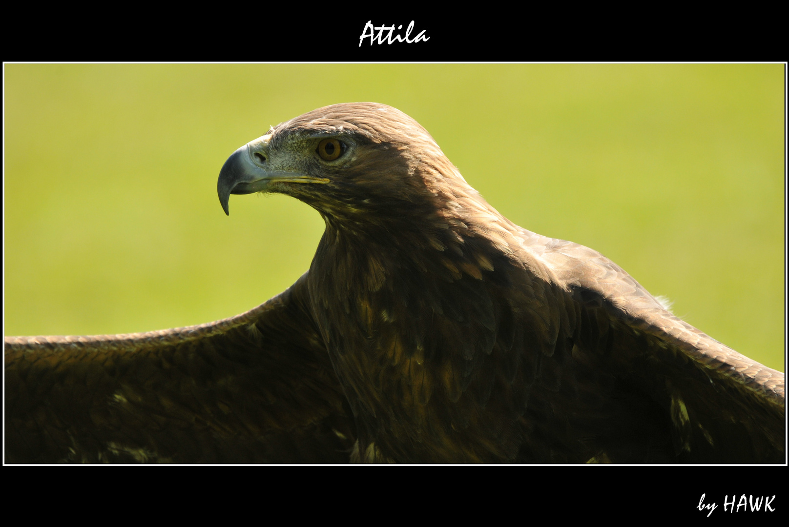 Attila - Porträit