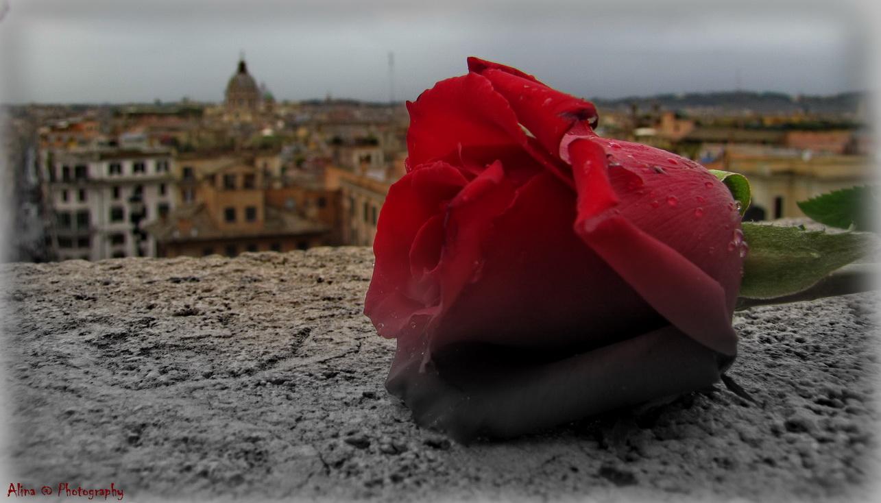 Attimo di una rosa