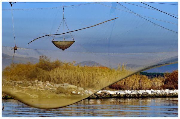 ...attraverso le maglie delle reti....