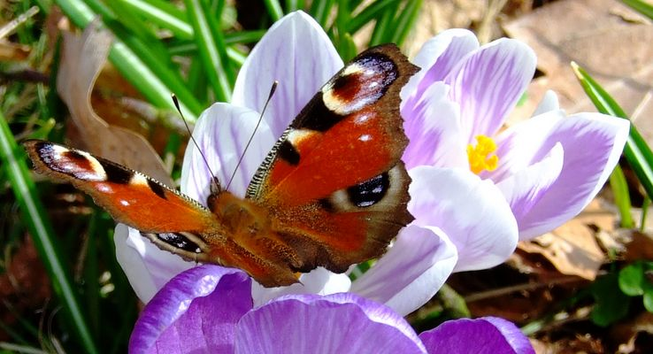 Attribute des Frühlings