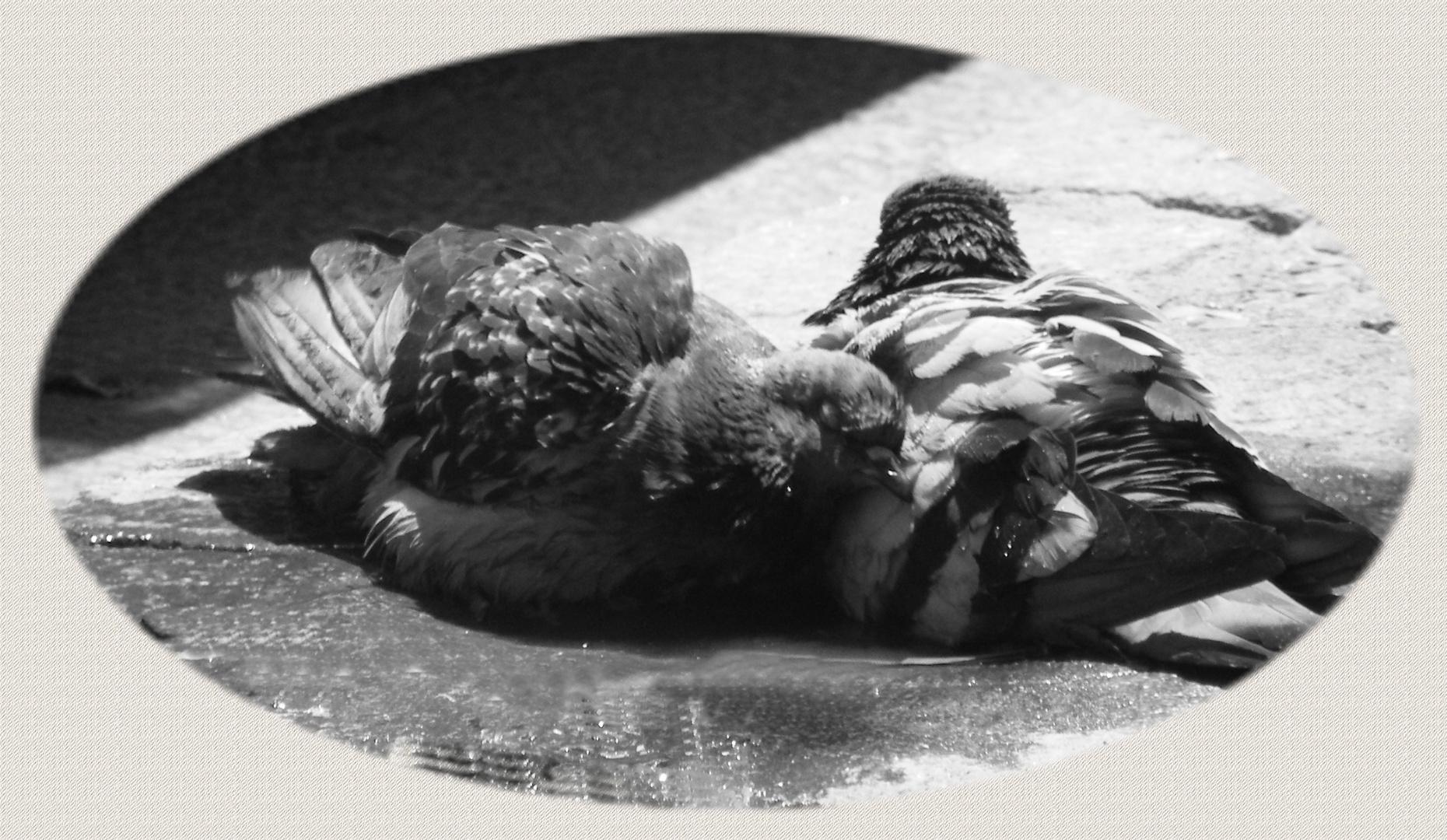 au bain ..............!!!!!!!!!!!!!!!!