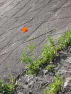 au beton fleuri