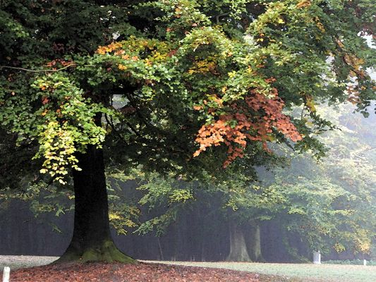 Au bois de la Cambre - Bruxelles