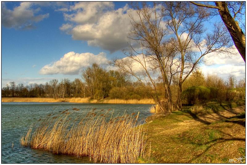 Au bord de l'étang.