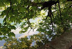au bord du lac au frais des maronniers...