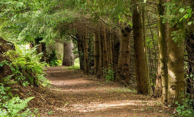 Au coeur de la forêt, ce chemin...