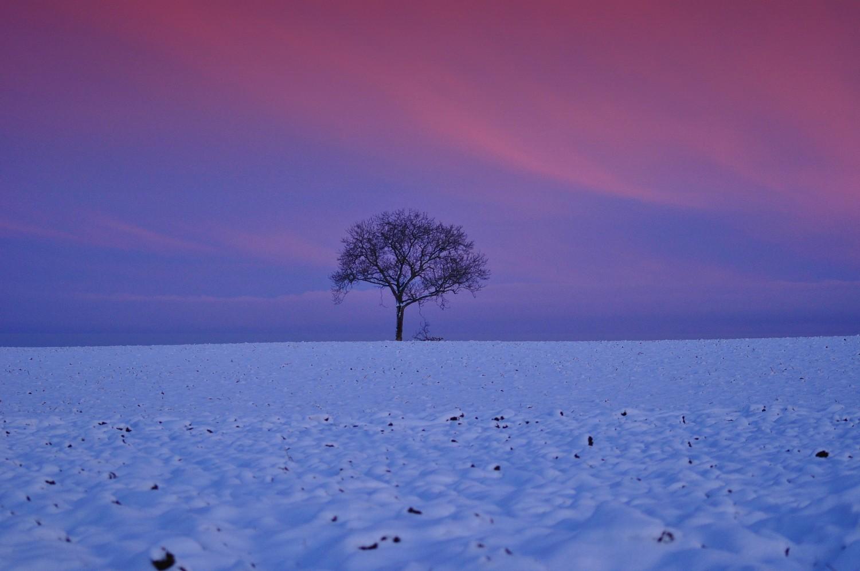 Au crépuscule dans la neige