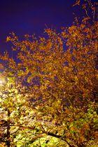 Au debut de l'automne...