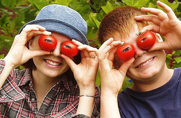 (Au-)Gen-Tomaten...