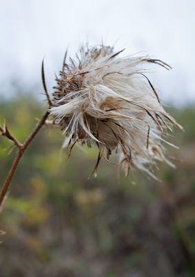 au gré du vent