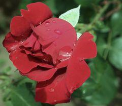 au jardin après la pluie...