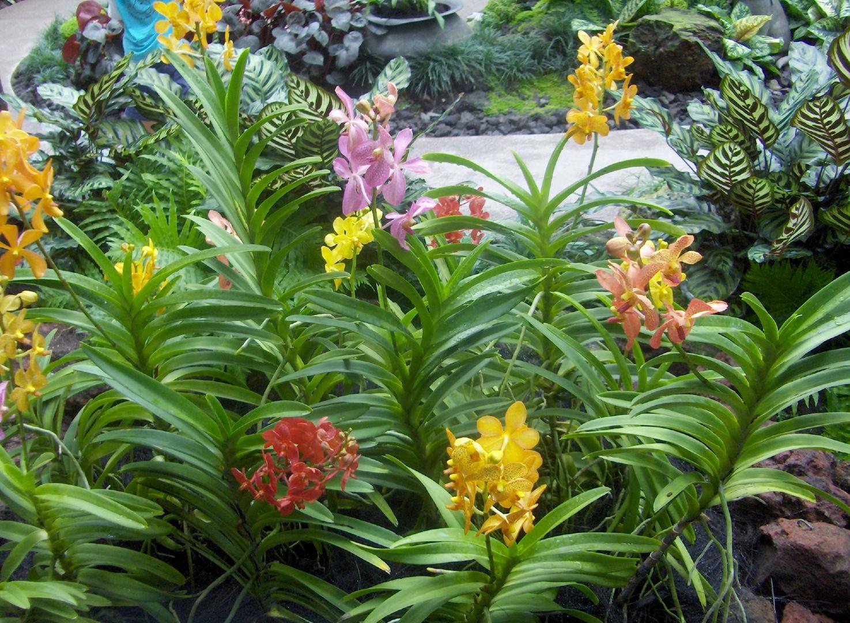 Au jardin botanique de singapour photo et image fleurs for Jardin botanique singapour
