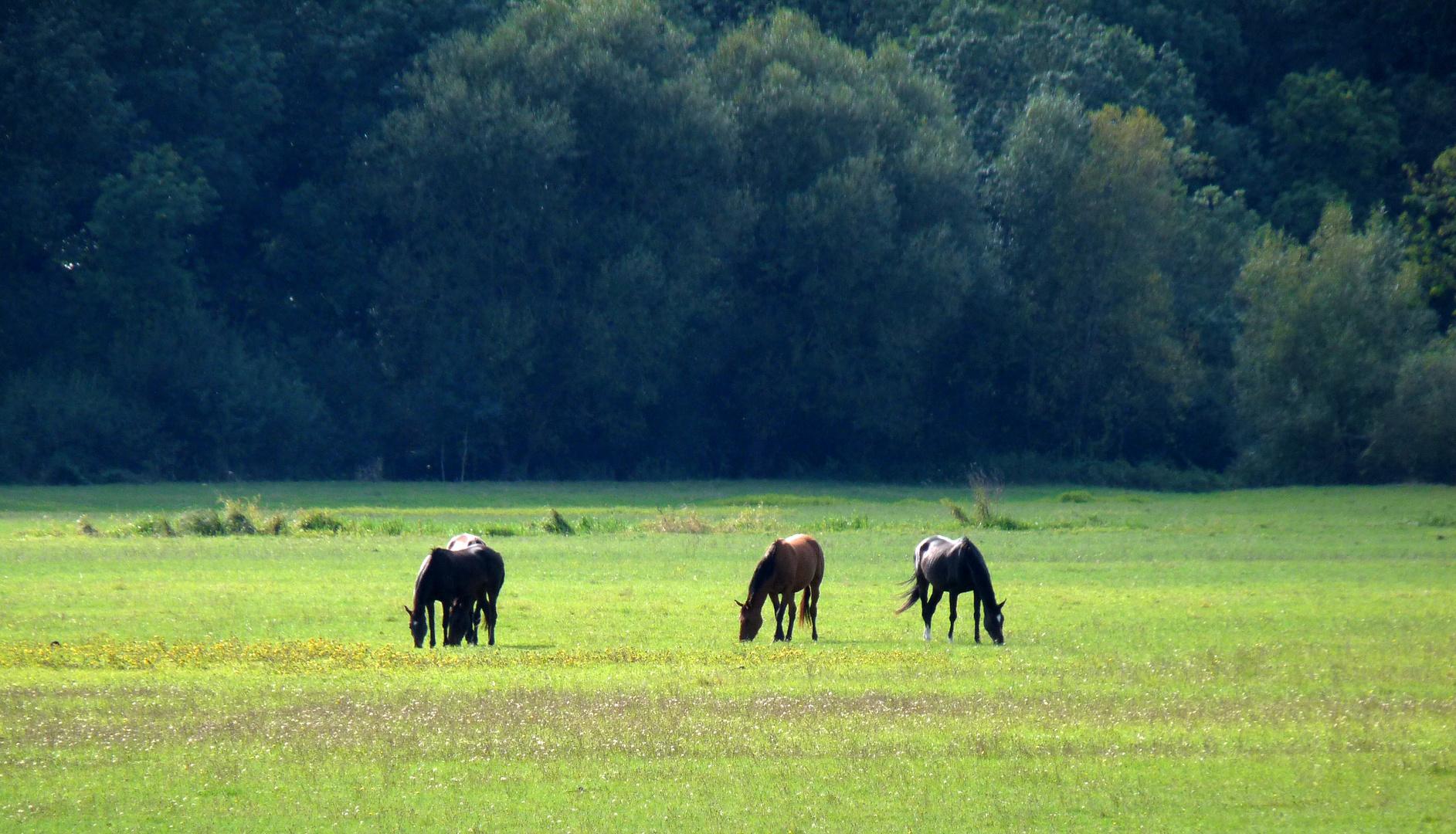 Au loin ....  les chevaux.
