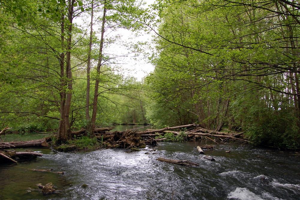 au milieu de la rivière