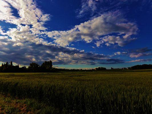 au milieu des blés