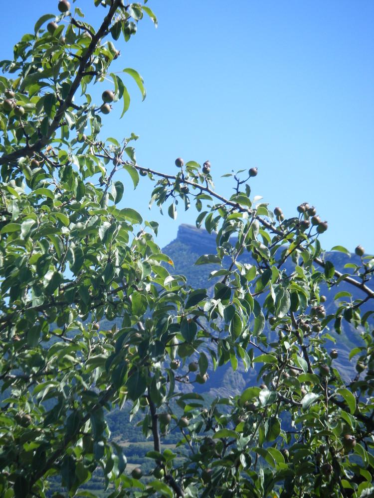 au milieu la montagne de Céuze( Hautes Alpes France)