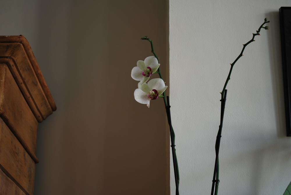au nom de la fleur ..