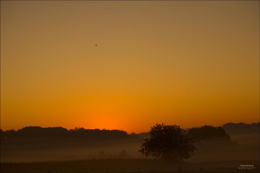 au petit matin dans la campagne....