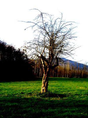 Au pied de mon arbre..