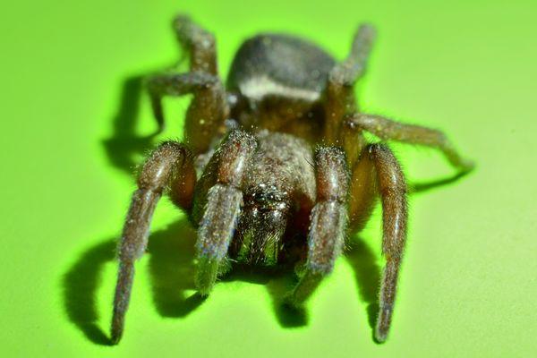 Au plus près du monstre ... à 8 pattes ... L'araignée sur ses gardes!
