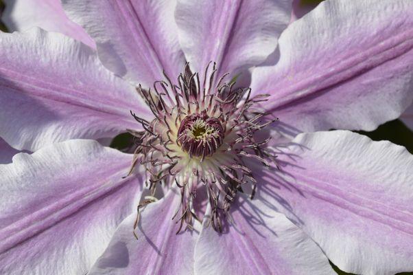 Au plus proche de la fleur
