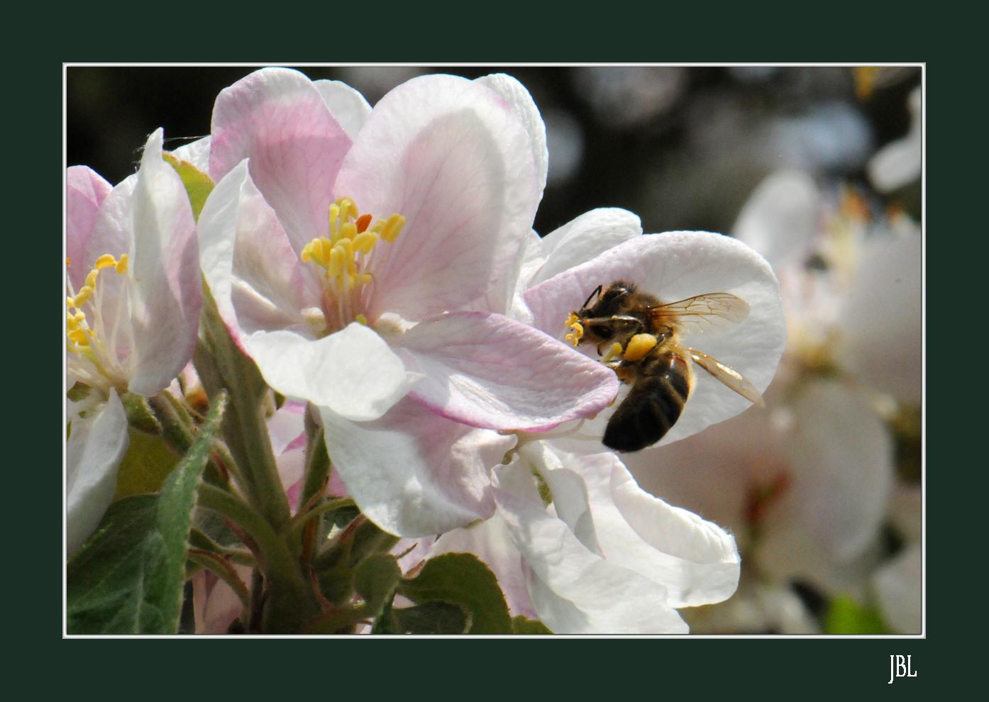 Au royaume des abeilles...