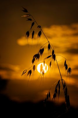 ...au soleil couchant...