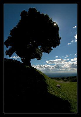 Au soleil de mon arbre