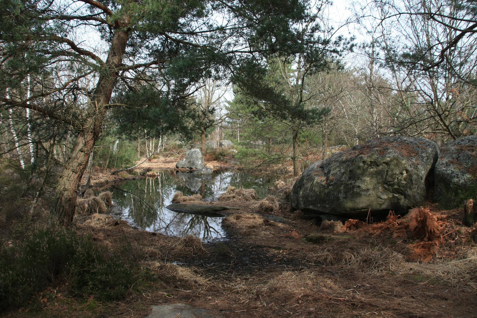 Au sommet d'une des 25 bosses de Fontainebleau..