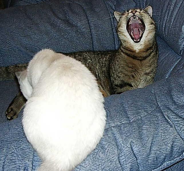 Auaaah, doch nicht in meinen Schwanz beissen!