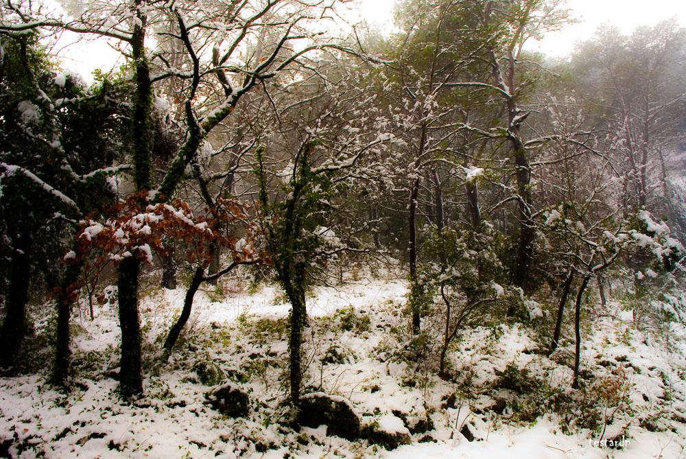aubagne sous la neige 2
