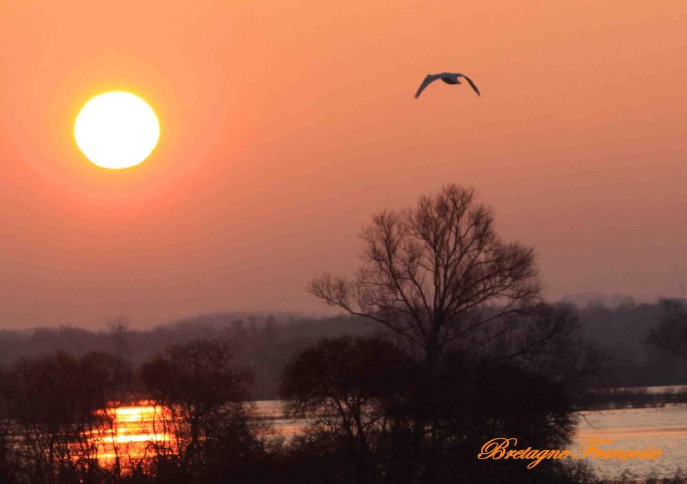 aube sur les marais