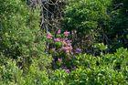 Auch Amazonien kann schön blühen