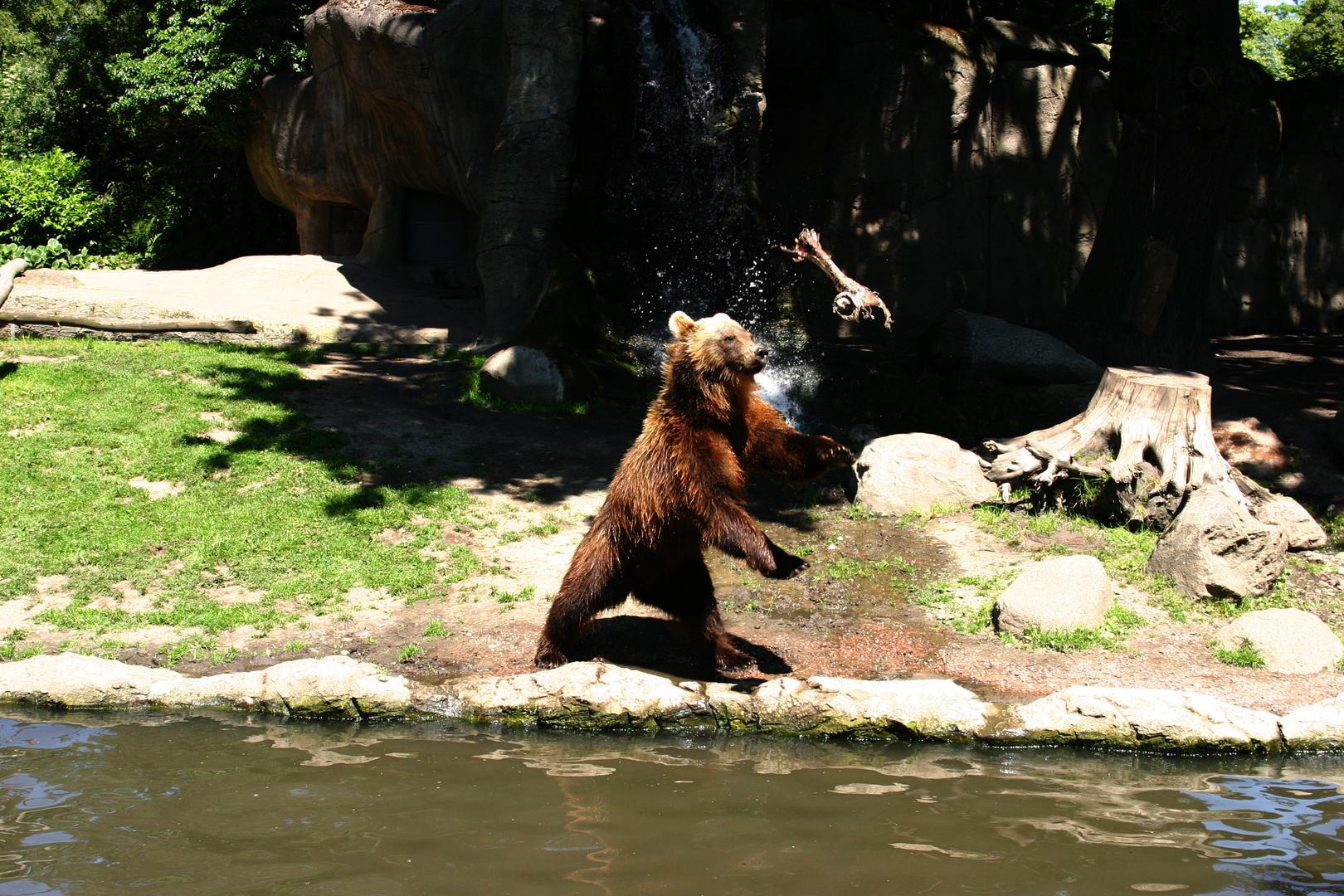 Auch Bären spielen