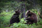 Auch Bärenkinder sind sehr neugierig :-)