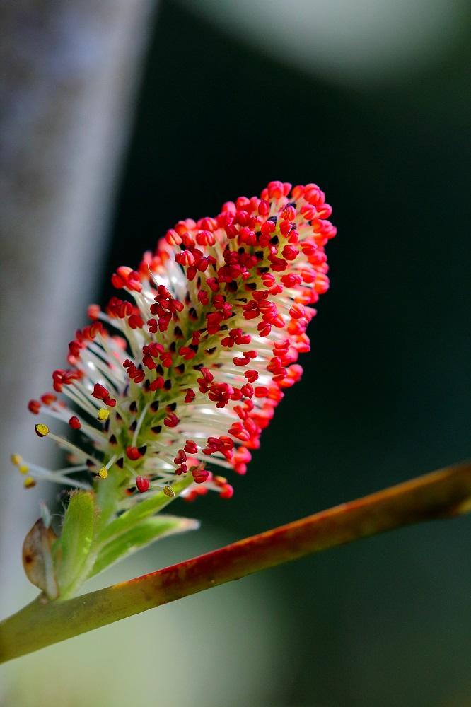 Auch Bäume blühen bunt