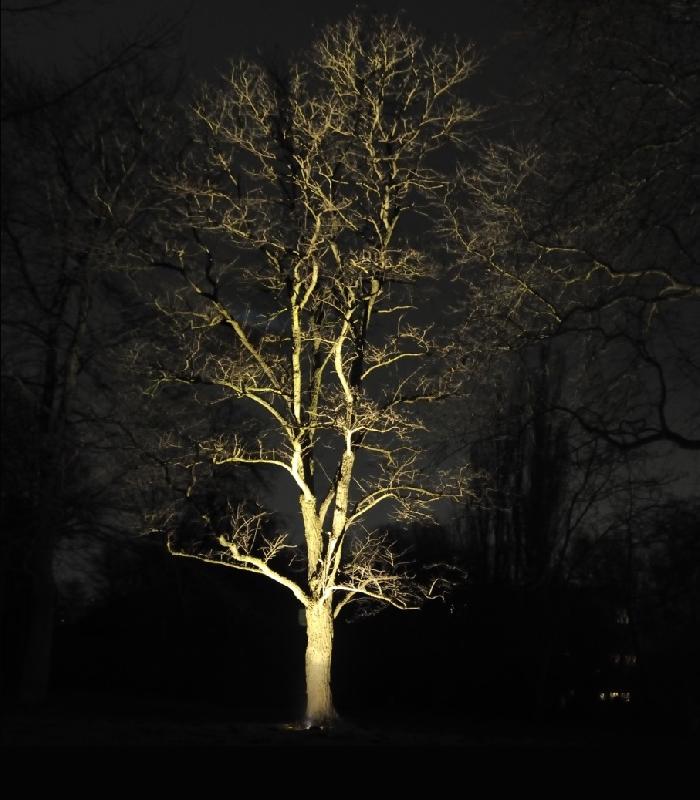 Auch Bäume brauchen Licht