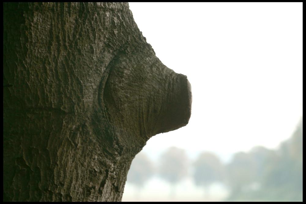 Auch Bäume frieren ; ))