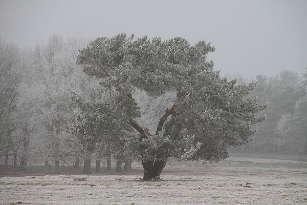 Auch Bäume haben ein Herz