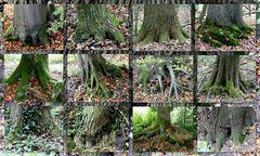 Auch Bäume haben Füße ;-)